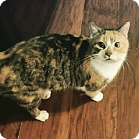 Adopt A Pet :: Cali - Taylorsville, IN