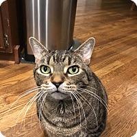 Adopt A Pet :: Twix (COURTESY POST) - Baltimore, MD