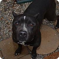 Adopt A Pet :: Ali - Athens, AL