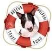 Bull Terrier Dog for adoption in New York, New York - Bull Terriers