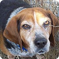 Adopt A Pet :: Copper - Novi, MI