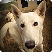 Adopt A Pet :: Akiko - Gadsden, AL