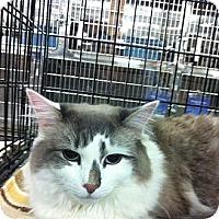 Adopt A Pet :: Isa - Pittstown, NJ