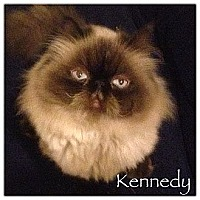 Adopt A Pet :: Kennedy (4 paw declawed) - Beverly Hills, CA