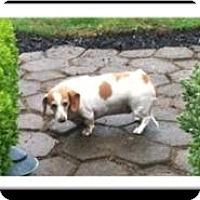 Adopt A Pet :: SUSIE - Portland, OR