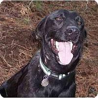 Adopt A Pet :: Lewis-PENDING - kennebunkport, ME