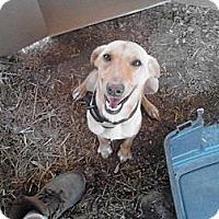 Adopt A Pet :: penny lane - Wedowee, AL