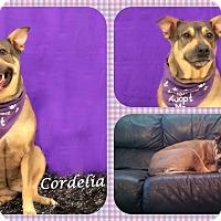 Adopt A Pet :: Cordelia - DOVER, OH