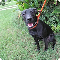 Adopt A Pet :: Isabelle - Lebanon, CT