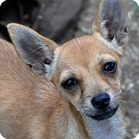 Adopt A Pet :: Peaches - Lodi, CA