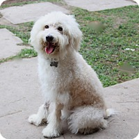 Adopt A Pet :: Barlow - Norwalk, CT
