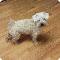 Adopt A Pet :: Glen - Crocker, MO