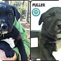 Adopt A Pet :: Fuller - Kimberton, PA