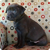 Adopt A Pet :: BO - Rancho Cucamonga, CA