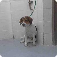 Adopt A Pet :: SNOOPY - Conroe, TX