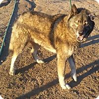 Adopt A Pet :: Barrett - Bonsall, CA