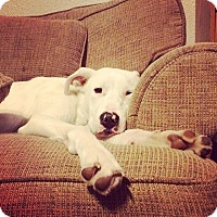 Adopt A Pet :: Wynter - oklahoma city, OK