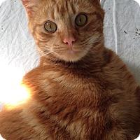 Adopt A Pet :: Red - Colmar, PA