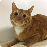 Adopt A Pet :: Cruz - Medina, OH