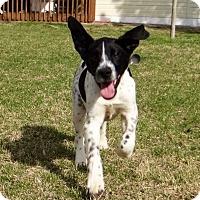 Adopt A Pet :: Wall-E - Huntsville, AL