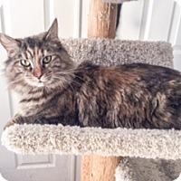 Adopt A Pet :: Linda - New York, NY