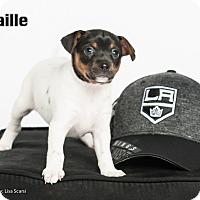 Adopt A Pet :: Taille - Irvine, CA