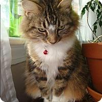 Adopt A Pet :: LILLY - Winterville, NC