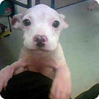 Adopt A Pet :: A272550 - Conroe, TX