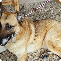Adopt A Pet :: Gloria - Kingwood, TX