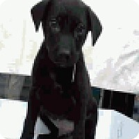 Adopt A Pet :: Captain - Fort Collins, CO