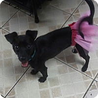 Adopt A Pet :: Sian - Miami, FL