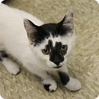 Adopt A Pet :: Ace - Medina, OH