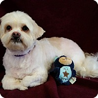 Adopt A Pet :: Clark Montgomery - Urbana, OH