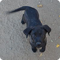 Adopt A Pet :: Tasha - Peyton, CO