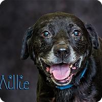 Adopt A Pet :: Millie - Somerset, PA