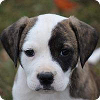 Adopt A Pet :: Hugo~adopted!! - Glastonbury, CT