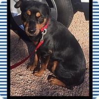 Adopt A Pet :: Koba - Scottsdale, AZ