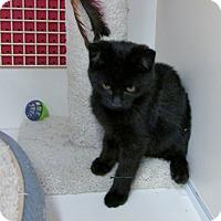 Adopt A Pet :: Bruce - Richmond, VA