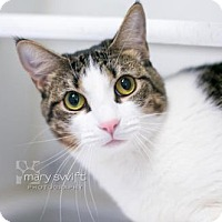 Adopt A Pet :: Candy - Reisterstown, MD