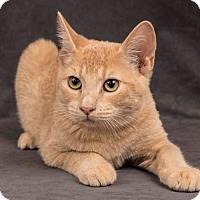 Adopt A Pet :: Bermuda - Davis, CA