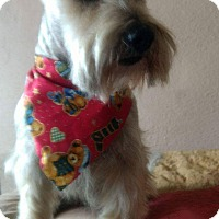 Adopt A Pet :: Rico - LAKEWOOD, CA