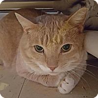 Adopt A Pet :: Rolex - Salisbury, MA