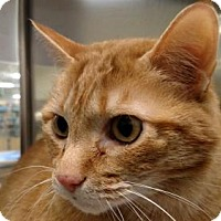 Adopt A Pet :: Jack - Schaumburg, IL