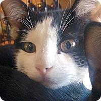 Adopt A Pet :: Bruno - South Saint Paul, MN