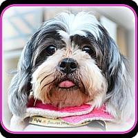Adopt A Pet :: Sassie-VA - Suffolk, VA