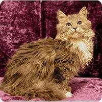 Adopt A Pet :: Aster - Sacramento, CA