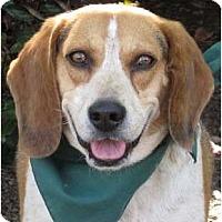 Adopt A Pet :: Rider - Encinitas, CA