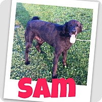 Adopt A Pet :: Sam - Brazil, IN
