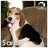 Adopt A Pet :: Sandy - Novi, MI