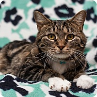 Adopt A Pet :: Mustard - Addison, IL